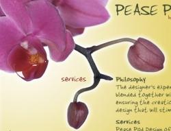 Pease Pod - Photograph